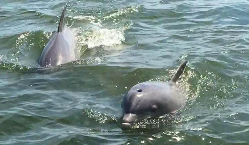 h2o-sports-hilton-head-dolphin-tours